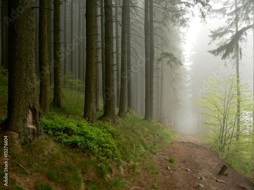 Foto auf Acrylglas Wald im Nebel Misty path