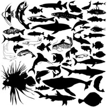 46 Pieces Of Vectoral Fish And...