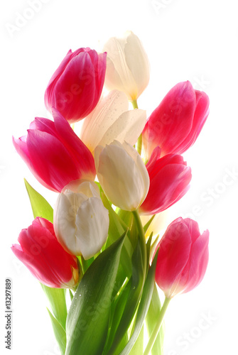 Wall Murals Tulip pink and white tulips