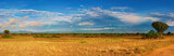 Fototapeta Sawanna - African savanna