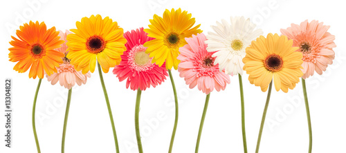 Tuinposter Gerbera colorful daisy flowers