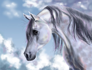 White horse on clouds backgraund