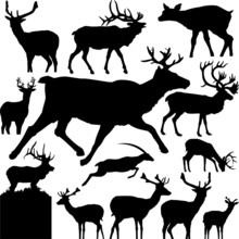 13 Pieces Of Deer  Silhouettes