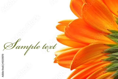 Foto-Duschvorhang - Daisy flower (von Roman Sigaev)