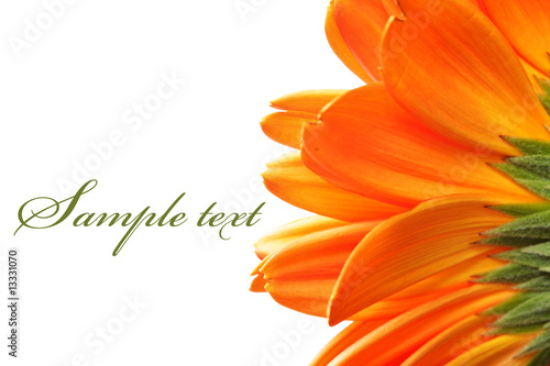 Foto-Lamellen - Daisy flower