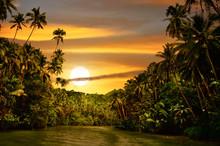 Rainforest River Sunset