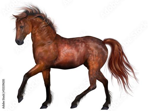 Photo  Beautiful Horse