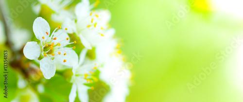 Cadres-photo bureau Fleuriste image de fleur au printemps - fleurs blanches et fond vert