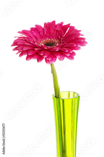 Fotobehang Gerbera Red gerbera isolated on the white background