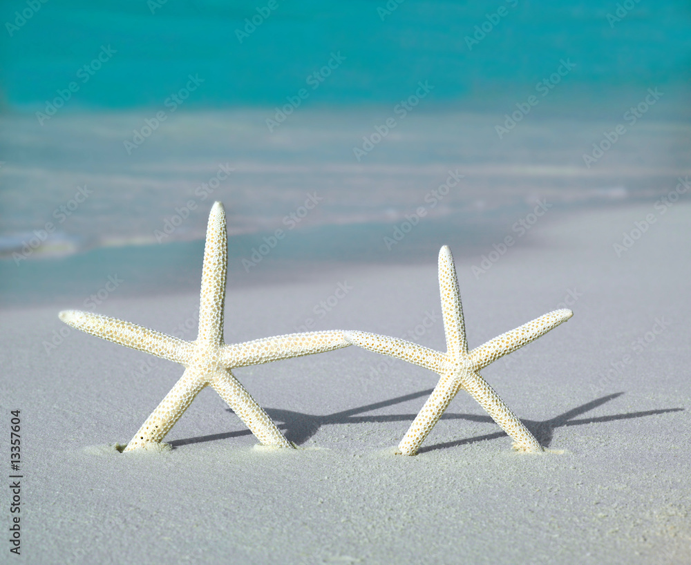 Foto Rollo Basic - two starfishs on the beach