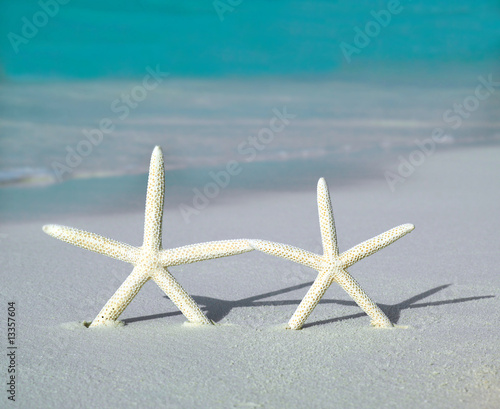 Foto-Leinwand - two starfishs on the beach