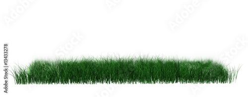 Fotomural Gras freigestellt
