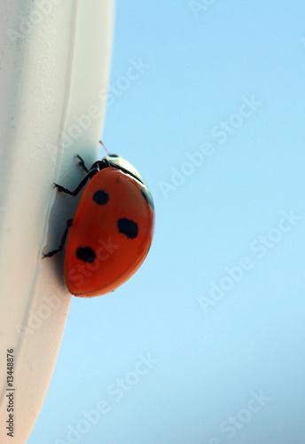 Fotografie, Obraz  ladybird on the sky background