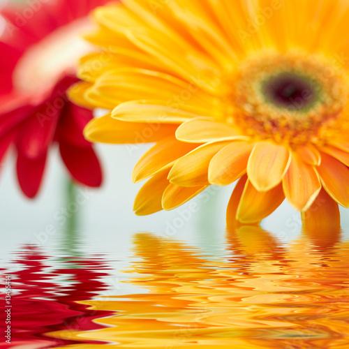 Fototapety, obrazy: Closeup photo of yellow daisy-gerbera