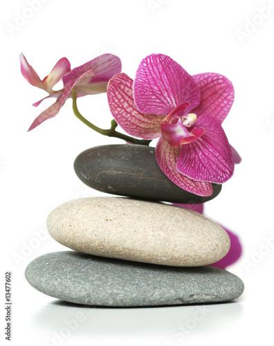 orchidea-klasc-na-kamieniach