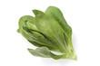 Feldsalat, Salat, Valerianella