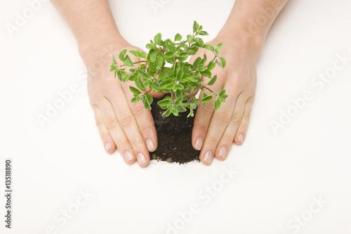 Fototapeta Hands pressing small tree and soil obraz na płótnie