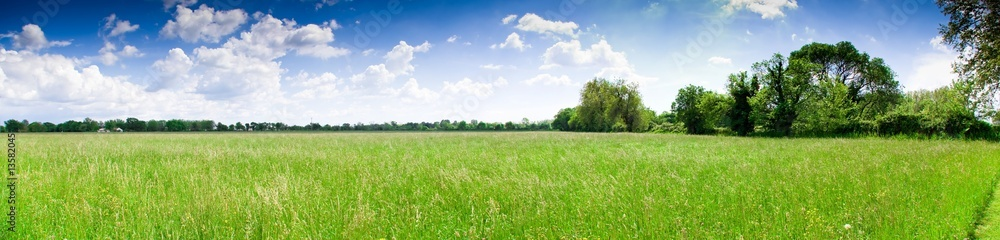 Fototapeta prairie camarguaise