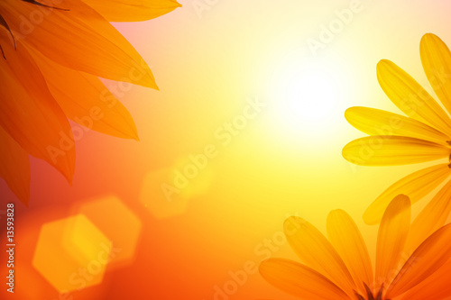 Sunshine background with sunflower details