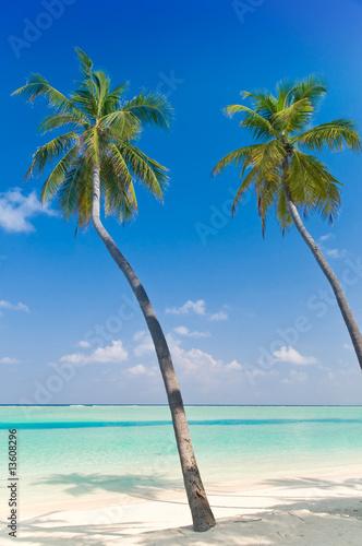 Foto-Leinwand - Tropischer Strand mit Palmen