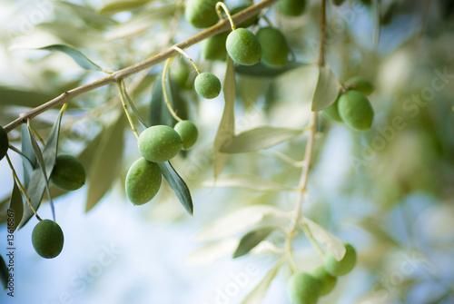 Stickers pour porte Oliviers image d'une branche d' olivier avec des olives vertes