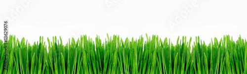 Deurstickers Gras gras