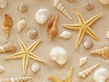 Seesterne Und Muscheln