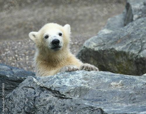 In de dag Ijsbeer junger Eisbär