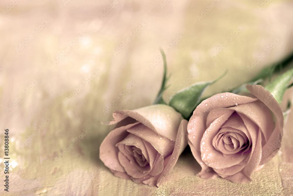 Fototapety, obrazy: zwei rosen