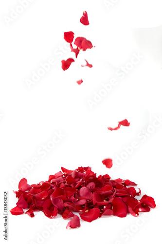Fotografía  Red rose petals