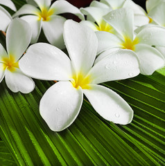 Obraz na Szkleflowers spa