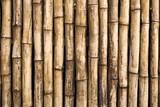 Fototapeta Bamboo - Bamboo