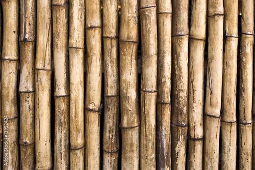 Fotografia, Obraz  Bamboo