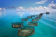 Marine Fishery In Tropical Sea