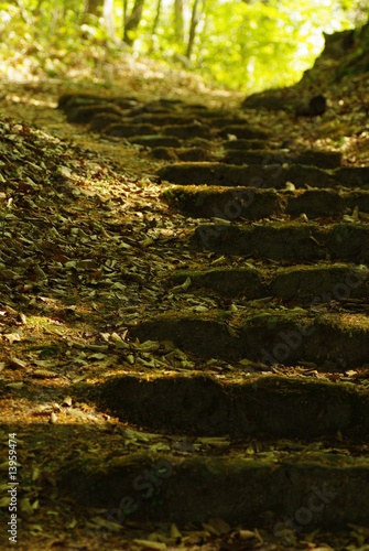 Obraz na plátně  森の中の階段