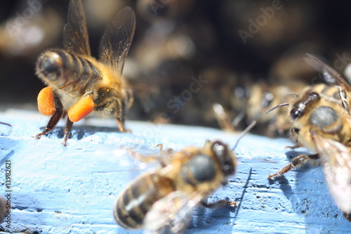 Aluminium Prints Bee abeille à la ruche