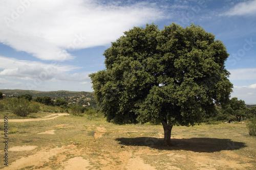 Fototapety, obrazy: arbol y su sombra