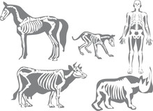 Human And Animals Skeletons