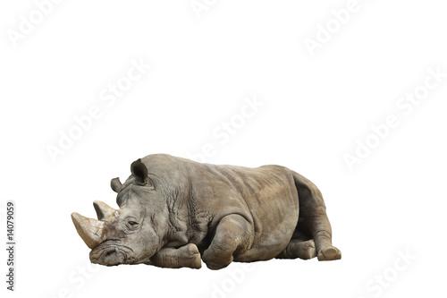 Spoed Foto op Canvas Neushoorn Rinoceronte