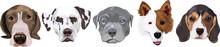 Various Face Dog