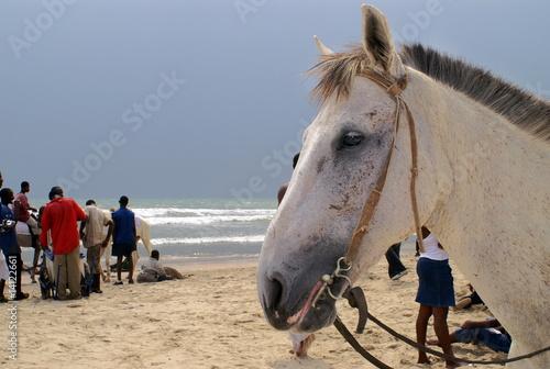 Poster Artist KB Pferdekopf am Strand von Accra, Ghana