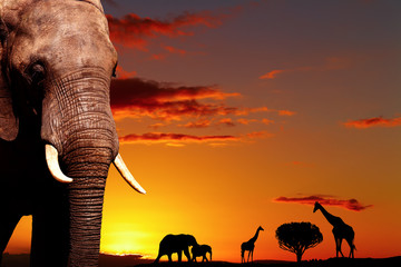 Fototapeta African nature concept
