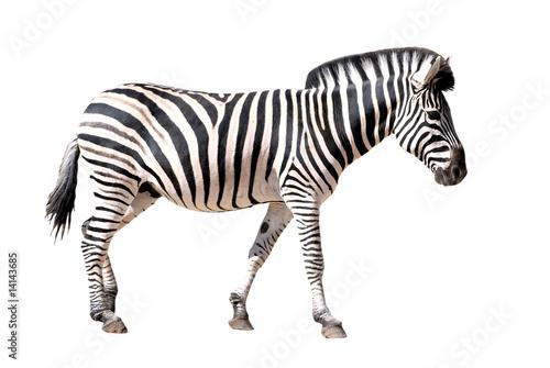 Fond de hotte en verre imprimé Zebra Détourage de profil d'un zèbre des plaines