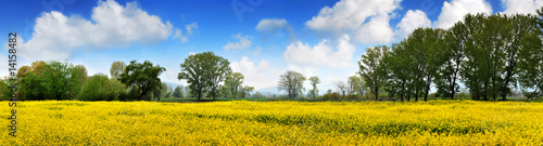 Fotobehang Oranje Rapen yellow field and deep blue sky