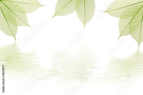 Valokuva  Composition nervures feuilles vertes avec reflet