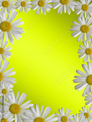 Canvas Prints Ladybugs floral background with a white camomile