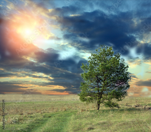 Valokuva  Alone pine on steppe