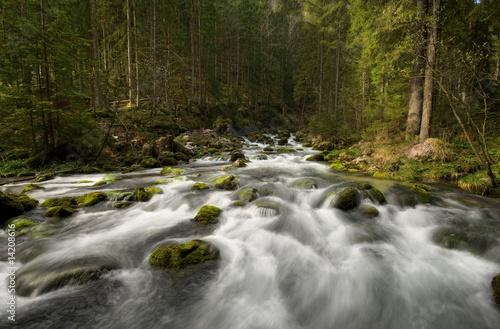 Aluminium Prints Forest river Wege des Wassers
