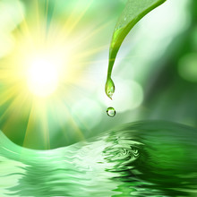 Green Leaf With Drop Of Water ...
