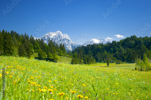 Fotografie, Obraz  alpen panorama mit wiese im vordergrund